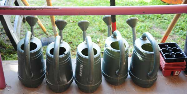 Photo of watering cans
