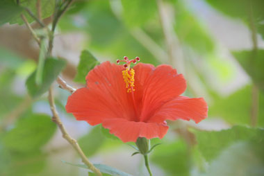 Photo of red flower